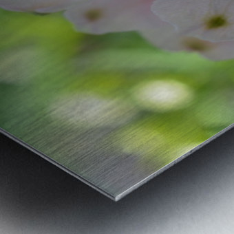 White Flowers Photograph Metal print