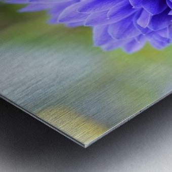 Blue Flowers Photograph Metal print