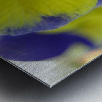 Yellow Pansy Photograph Metal print