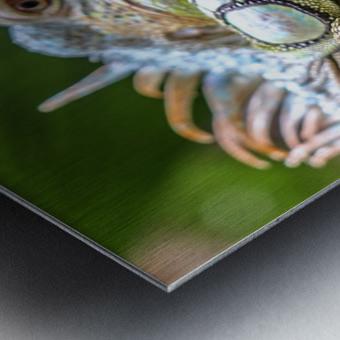 The Raptor Metal print