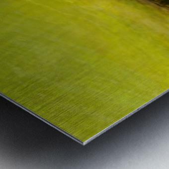 8F83594E DB8C 48CD 9C44 275A2A81B5DD Metal print