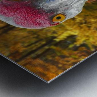 Sandhill Crane Metal print