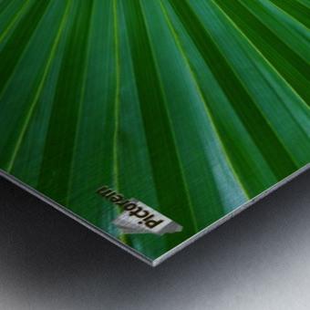 Palm tree detail Metal print