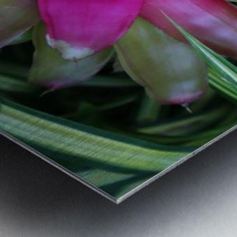 Bromeliad Metal print