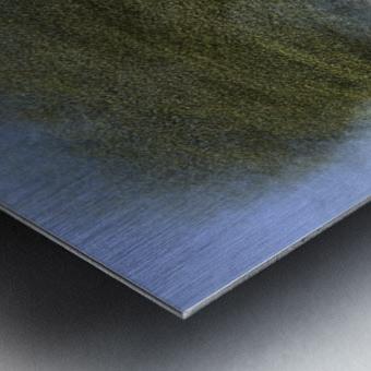 Ceiba speciosa Metal print