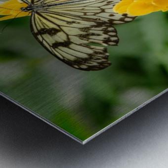 Papillon Rice paper Metal print