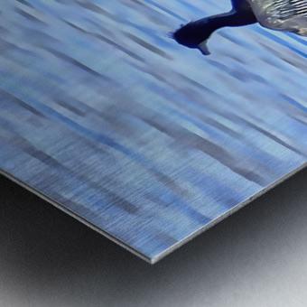 Cormorant Drying  His Wings Metal print