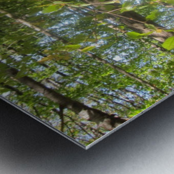 Landscape (105) Metal print