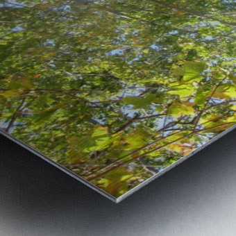 Landscape (302) Metal print