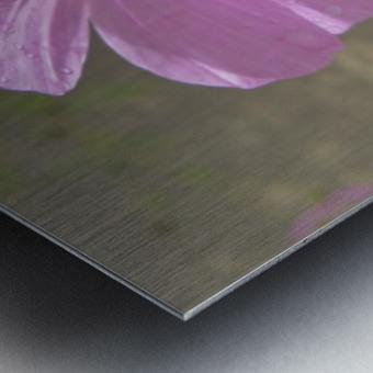 Flowers (83) Metal print