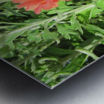 Flowers (55) Metal print