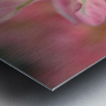 Pink Flower Photograph Metal print