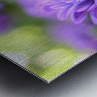 Blue Flower Photograph Metal print