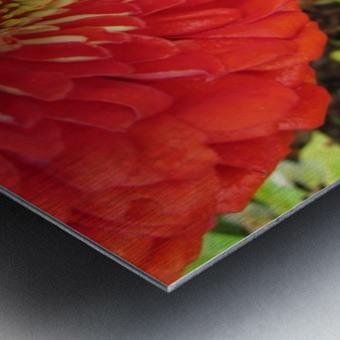 Flower (7) Metal print