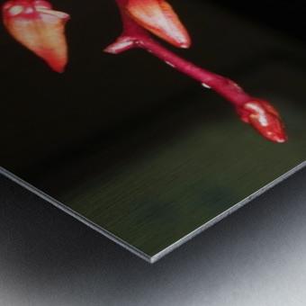 IMG_0124_a_WS Metal print