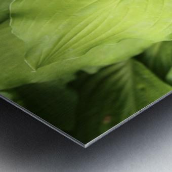 Softly Curving Foliage 062618 Metal print