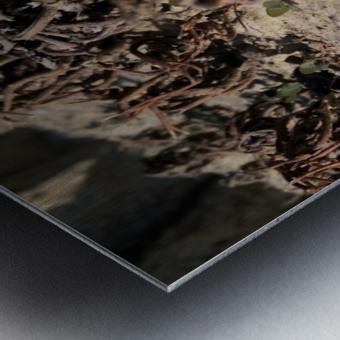 Ox Metal print