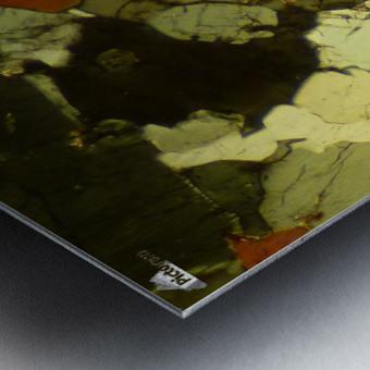 Forest Primeval Metal print