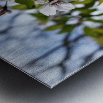 Soft-Focus Flower Scene Metal print