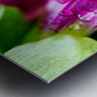 Macro Raindrop Photography Art 06 Metal print