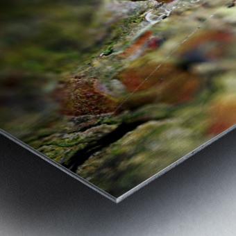 Macro Raindrop Photography Art 05 Metal print