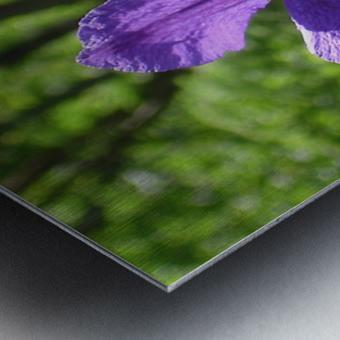 Flower Study -9 Metal print