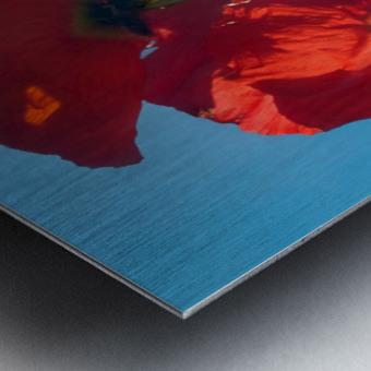 Poppies in the Sky Metal print