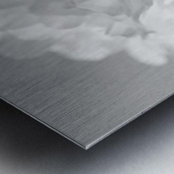 Softness in Black & White Metal print