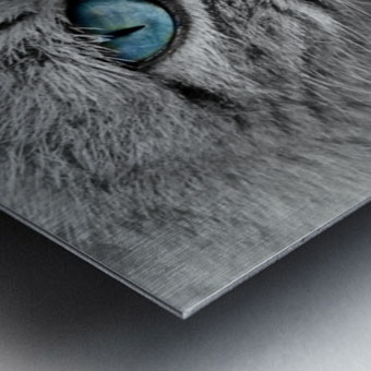 cat animal cat portrait mackerel Metal print