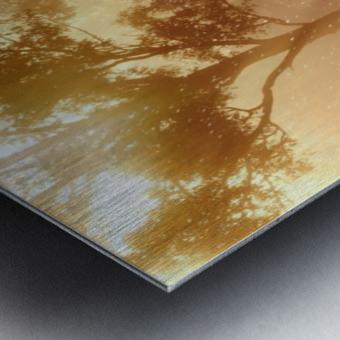 hirsch wild antler nature forest Metal print
