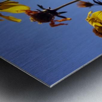 Summer Sky Flowers 1 Metal print