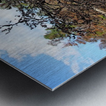 The Pine Tree I Metal print