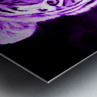 Tiger pop purple Metal print