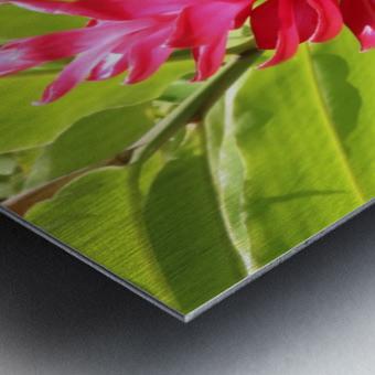 Carribean Beauty Metal print