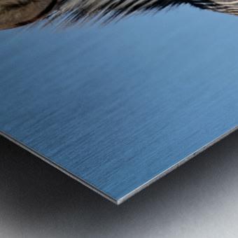 Zebra 5091 Metal print