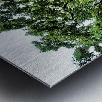 Larrys Tree Metal print