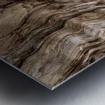 Banff Petrified Wood Metal print