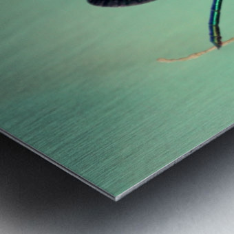 libellule 3 Metal print
