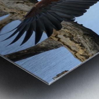 african fish eagle Metal print
