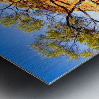 Twisted Tree - Kings Canyon Metal print