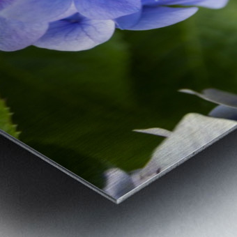 IMGP4936 Metal print