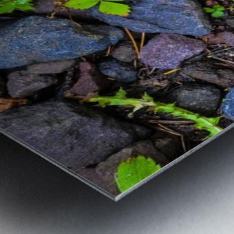 Forest floor Metal print