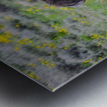 Bison in Wildflowers Metal print