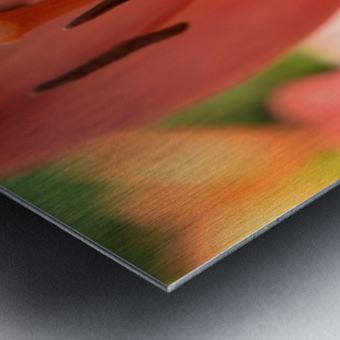 Beautiful In Orange Photography Metal print