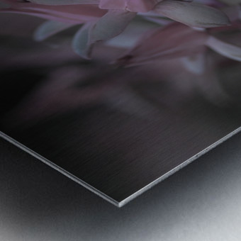 houseleek Metal print