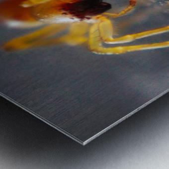 Spider reflecting Metal print