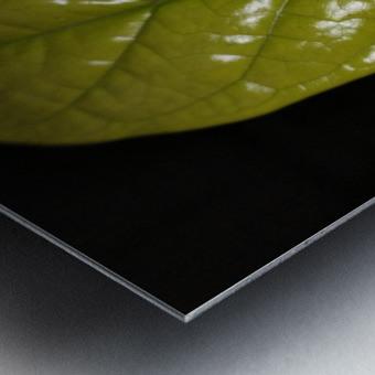Jasmine Flower Fragrance Metal print