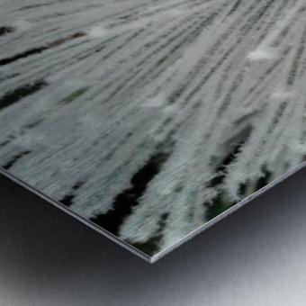 White Pine branch  Metal print
