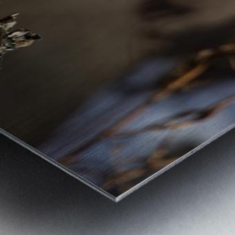 Downy on a Branch Metal print