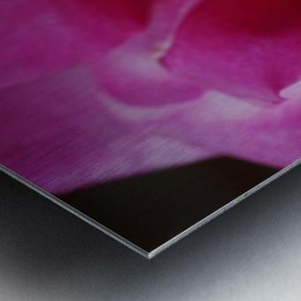 Heart Of Pink Rose Metal print